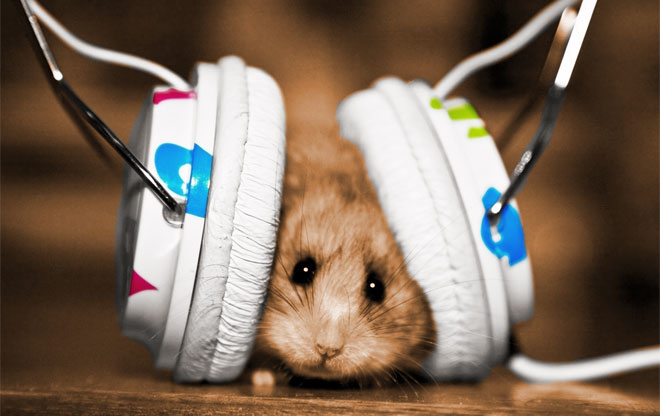 Hamster with Headphones