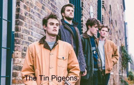 Tin Pigeons